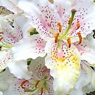 White Lilies by LoneAngel
