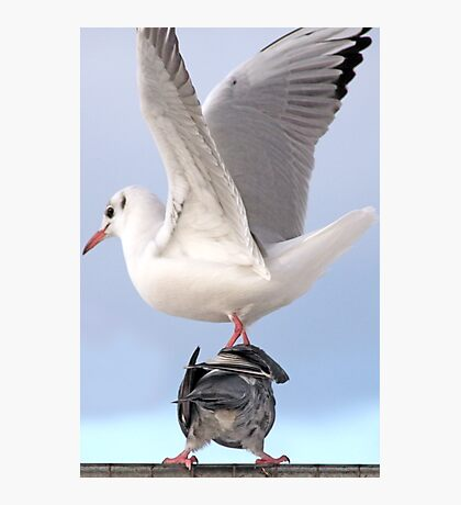 Drop by Anytime Said the Pigeon to the Gull Photographic Print