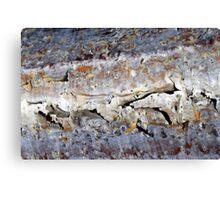 Silver peel Canvas Print