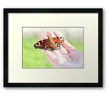 Rescued Peacock Butterfly Framed Print
