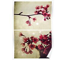 Spring - Cherryblossom Pink Poster