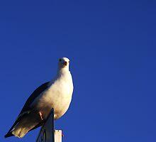 BIRD IN THE SKY by gracestout2007