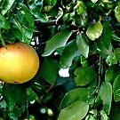 Single Grapefruit by Madison Jacox