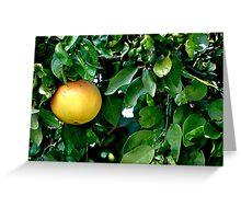 Single Grapefruit Greeting Card