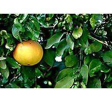Single Grapefruit Photographic Print