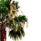 Single Palm by Madison Jacox