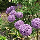 March of the Alliums by BlueMoonRose
