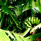 Green Bananas by Madison Jacox