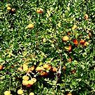 Tangerine Tree by Madison Jacox