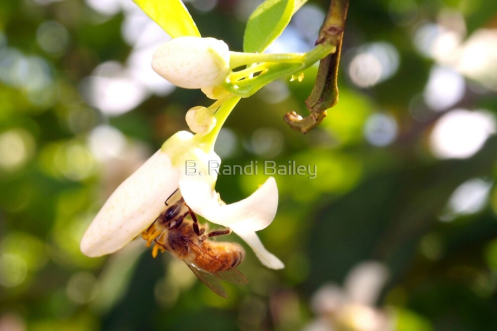 Blossoming Spring by ♥⊱ B. Randi Bailey