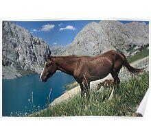Horse at the lake Poster