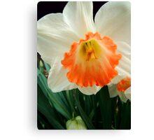 Daffodil © Canvas Print