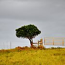 Gate and a Tree by Madison Jacox