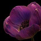 Anemone by jimmylu
