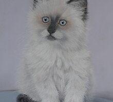Misty a friendly kitten by BarbaraBird