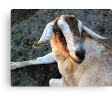 A Goats Life Canvas Print