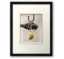 Bird Feed, not seed Framed Print