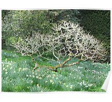 Dartington Garden Tree Poster