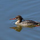 Young Merganser by Heather Pickard