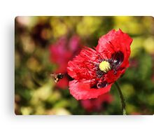 Bee and Poppy Canvas Print
