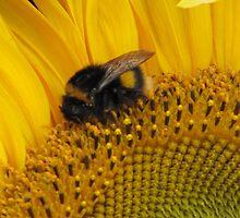 Bumble Bee Walk by Janice Petitjean