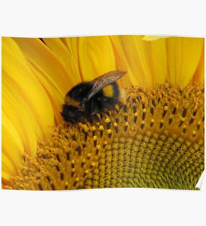 Bumble Bee Walk Poster