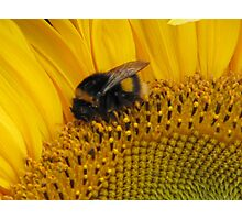 Bumble Bee Walk Photographic Print