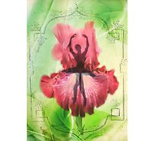 Spring dance  Photographic Print
