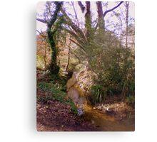 Upton Wood Stream Canvas Print