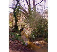 Upton Wood Stream Photographic Print