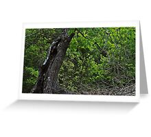 Old and New Oak Trees landscape photo Greeting Card