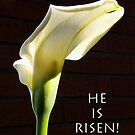 """""""he is risen"""" calla lily by dedmanshootn"""
