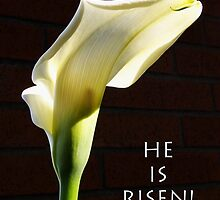 """he is risen"" calla lily by dedmanshootn"