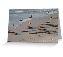 assorted Florida beach birds Greeting Card