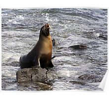 A Sea Lion in the Galapagos Islands Poster