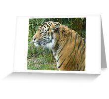 Male Sumatran Tiger - 'Fabi' Greeting Card