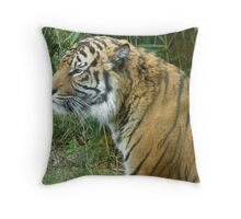 Male Sumatran Tiger - 'Fabi' Throw Pillow