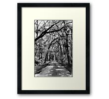 Gators and Lizzards and Snakes... OH MY !! Framed Print
