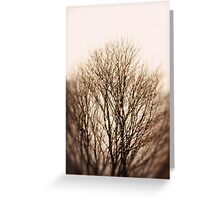 Bare Trees Greeting Card