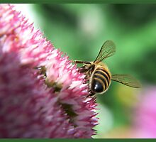 summer the bee by LisaBeth