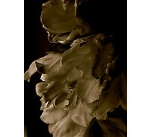 Libretto Tulips in Sepia Photographic Print