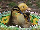Baby Ducks by Sandy Keeton