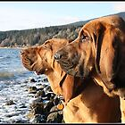 Bloodhounds, Bella & Jed by Tracey Ross