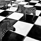 The Chessboard by Erica Yanina Lujan