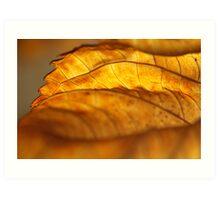 Hydrangea Leaf Edge Art Print