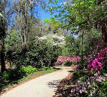 A Walk in Spring by Judy Wanamaker