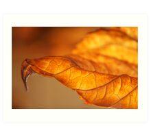 Hydrangea Leaf Tip Art Print