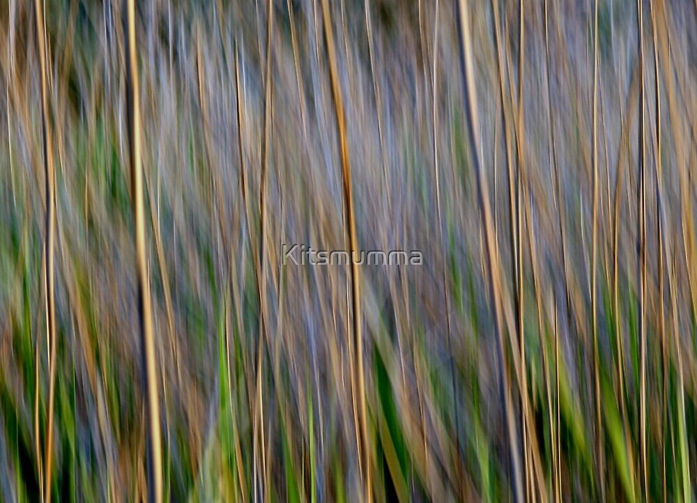 In the Wild by Kitsmumma