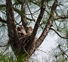 Full Nest by ejlinkphoto