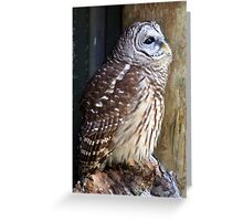 Blue-eyed Beauty Greeting Card